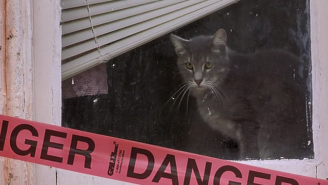 Head of State - grey cat Dionne in window of abandoned building