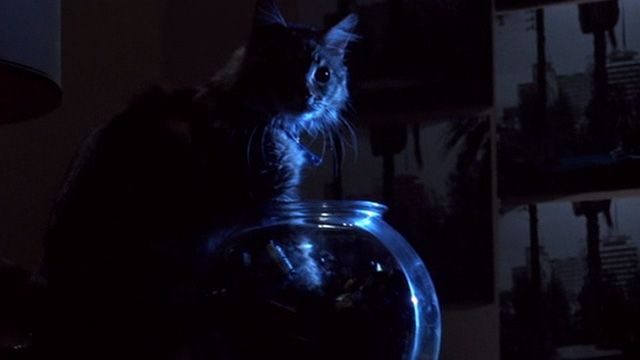 Heart Condition - long haired tabby Chuck reaching into fishbowl of film rolls