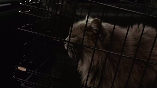 Hide and Seek - gray Maine Coon cat Sebastian in cage in car