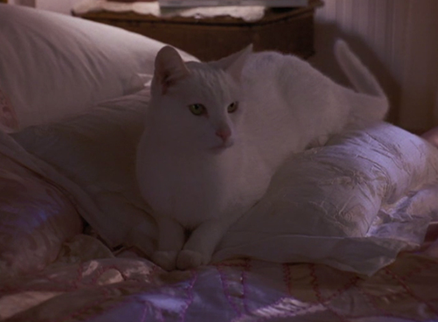 High School High - white cat sitting on bed