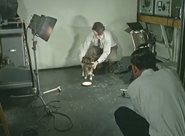 High Speed Photography - tabby cat in front of bowl of milk with man in studio