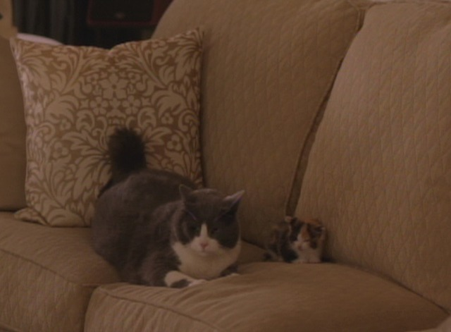 Hit by Lightning - cats on Danita's couch