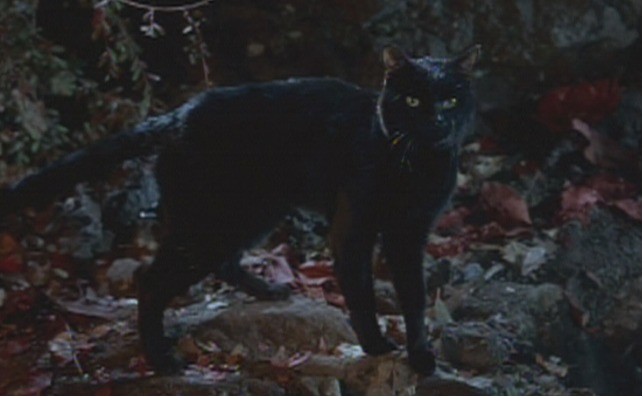 Hocus Pocus black cat Binx