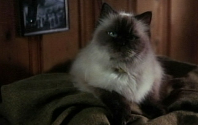 Homeward Bound: The Incredible Journey cat Sassy played by Tiki