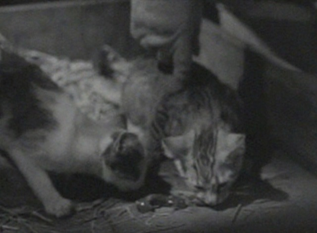 The Hoodlum Priest - kittens eating food from the ground