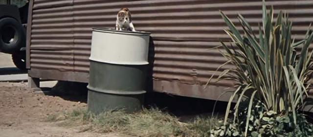 The Horizontal Lieutenant - calico cat on top of metal drum