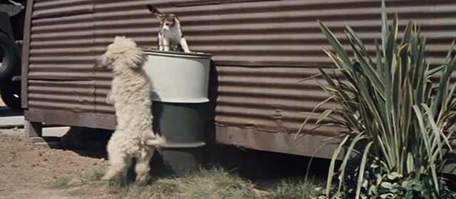 The Horizontal Lieutenant - dog barking at calico cat on top of metal drum