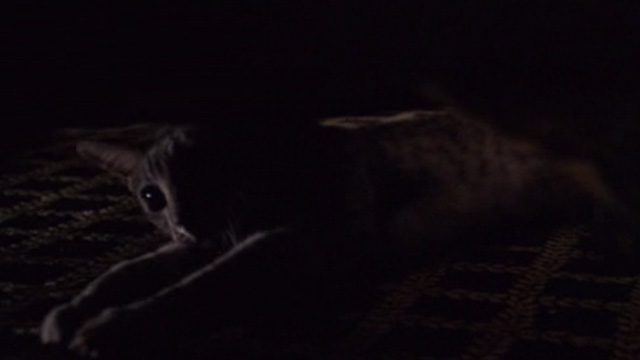 Horrible Bosses - Bengal striped tabby cat reaching under couch
