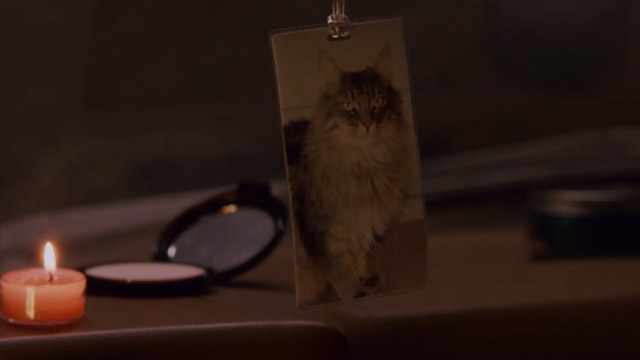 The House Bunny - photo of gray Maine Coon cat Pooter hanging in Shelley's car