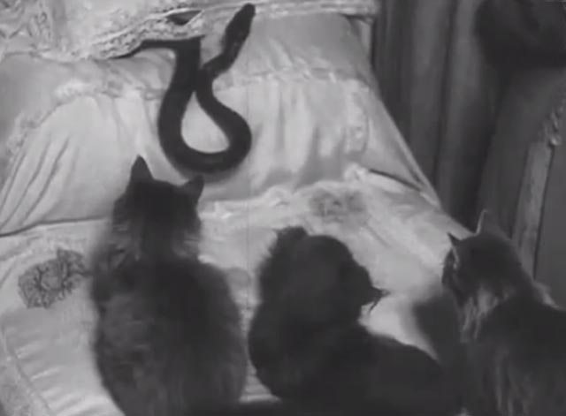 House Full of Snakes - cats and dogs looking at snake on bed