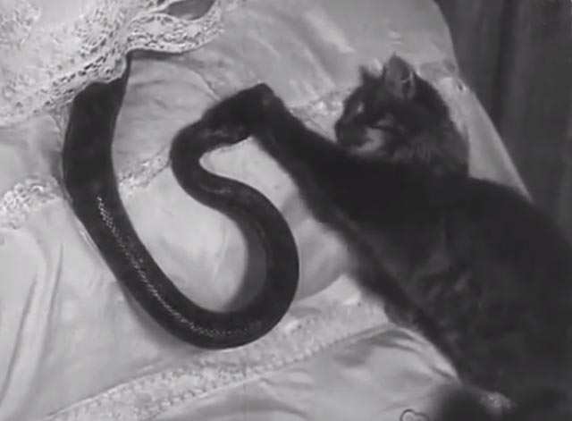 House Full of Snakes - long-haired tabby cat pawing at snake on pillow