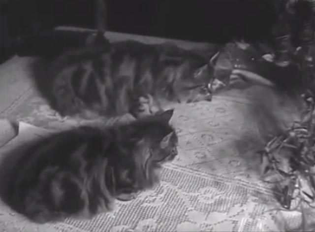 House Full of Snakes - two long-haired tabby cats  on table
