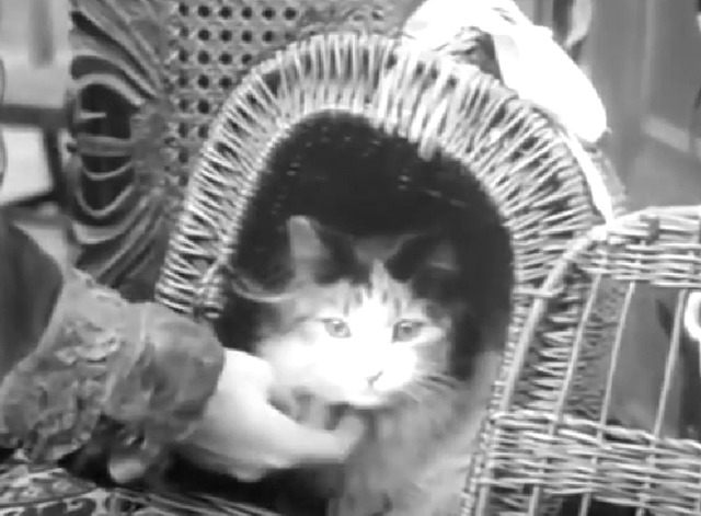 The House of Darkness - long-haired calico cat in carrier