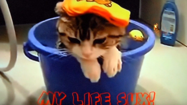 How to Let Go of the World and Love All the Things Climate Can't Change - viral cat video shot