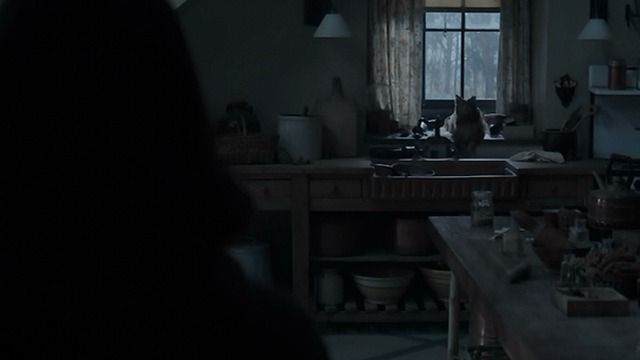 The Hunger Games: Mockingjay Part Two - Buttercup sitting on counter long shot