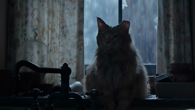 The Hunger Games: Mockingjay Part Two - Buttercup sitting on counter close shot