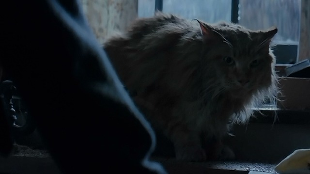 The Hunger Games: Mockingjay Part Two - Katniss pets Buttercup on counter