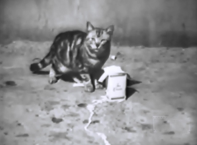 Ice Cream newsreel of tabby cat eating ice cream from container