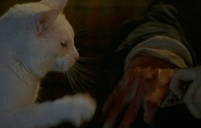 Idle Hands - cat Bones checking out possessed hand
