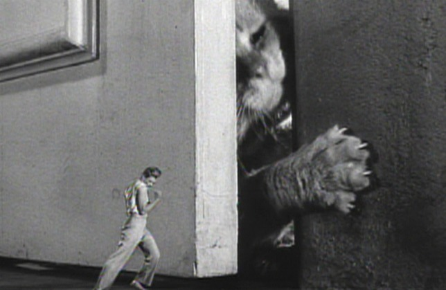 Incredible Shrinking Man cat Orangey as Butch basement door