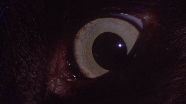 Inferno - close up of black cat's eye