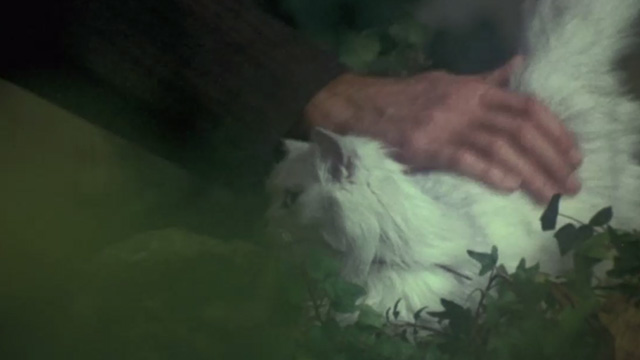 The Internecine Project - hand petting long-haired white Angora cat
