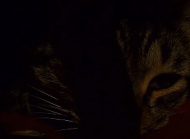 In Vanda's Room - tabby cat with eye open close up