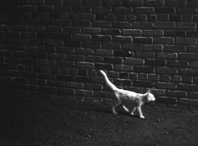 The Invisible Man - white cat beside wall
