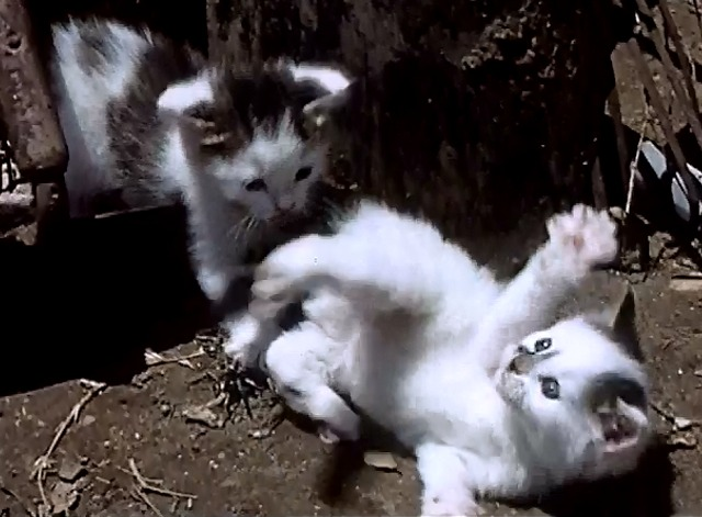 It's a Cat's Life - Kittens playing