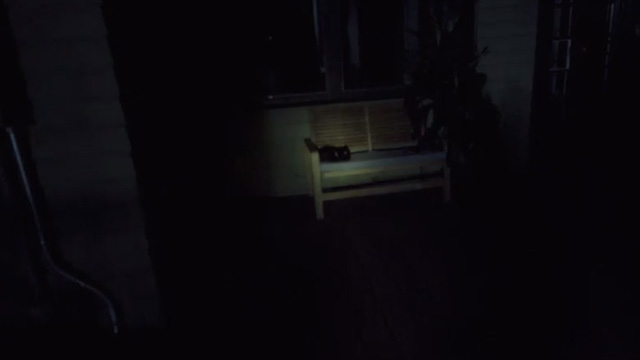 Jackals - black cat lying on bench on porch