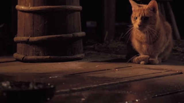 Jack the Giant Slayer - ginger tabby cat watching rain falling into bowl on floor