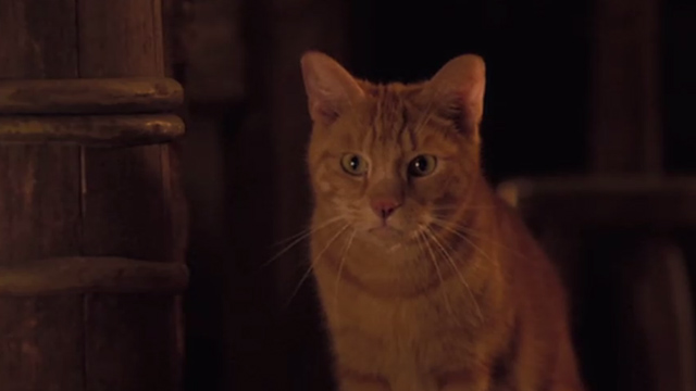 Jack the Giant Slayer - ginger tabby cat lookinh intent