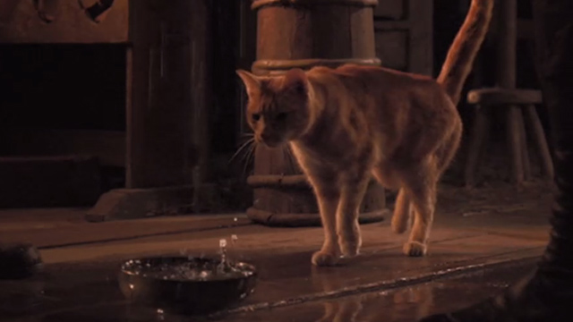 Jack the Giant Slayer - ginger tabby cat approaching bowl catching rainwater falling from ceiling