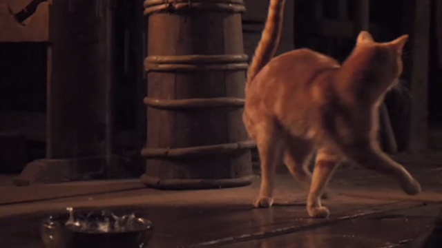 Jack the Giant Slayer - ginger tabby cat turning towards door