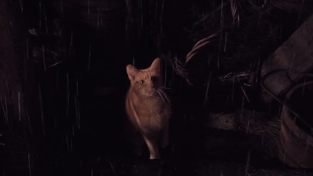 Jack the Giant Slayer - ginger tabby cat in rain looking up