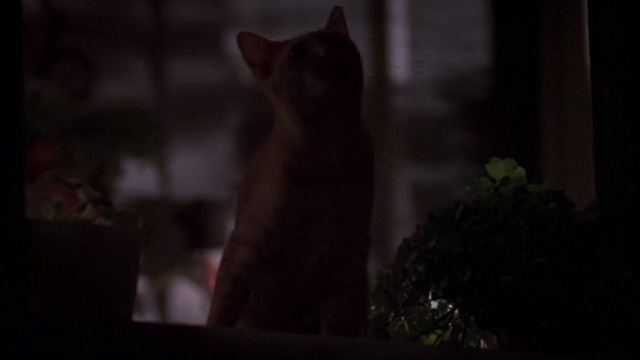 Jeepers Creepers - orange tabby cat behind screen on porch