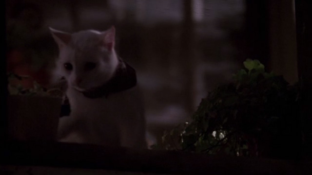 Jeepers Creepers - white cat behind screen on porch
