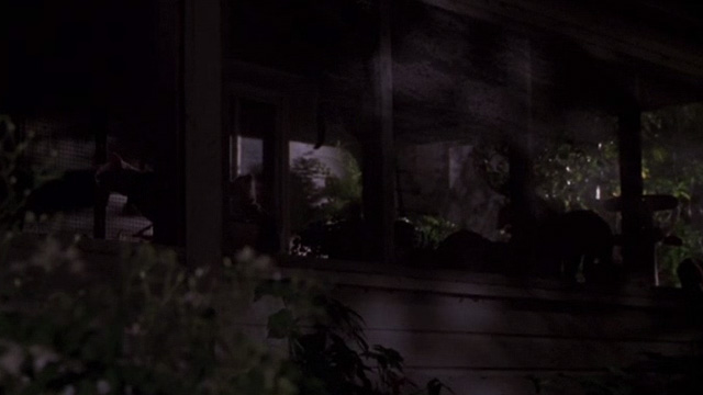 Jeepers Creepers - multiple cats behind screen on porch