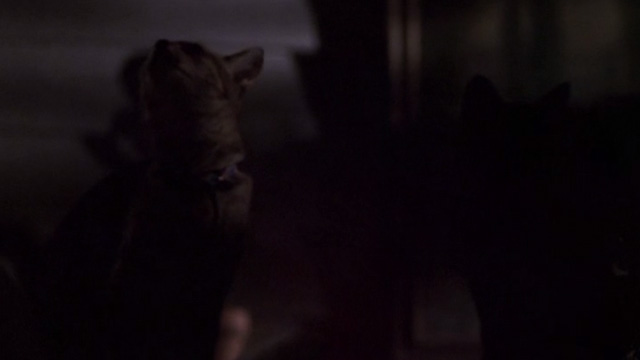 Jeepers Creepers - two cats behind screen on porch looking up