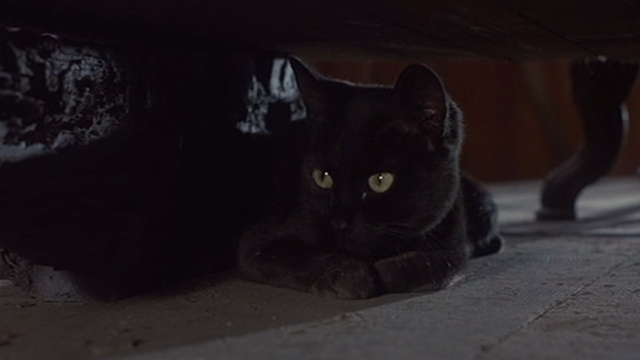 Jinxed! - black cat Angus hiding