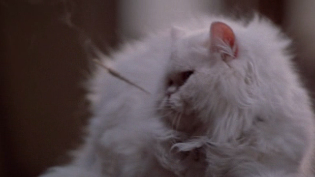 Jungle 2 Jungle - Coco white Persian cat hit by dart
