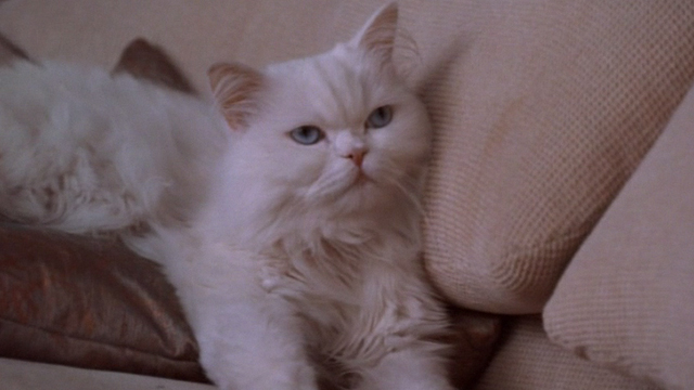 Jungle 2 Jungle - Coco white Persian cat