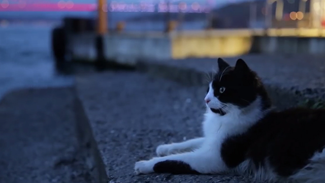 Kedi - tuxedo cat Aslan sitting outside restaurant Bosphorus