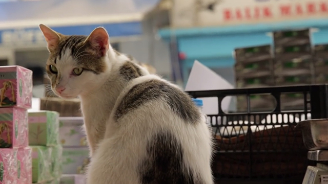 Kedi - white and brown tabby Deniz sitting in market