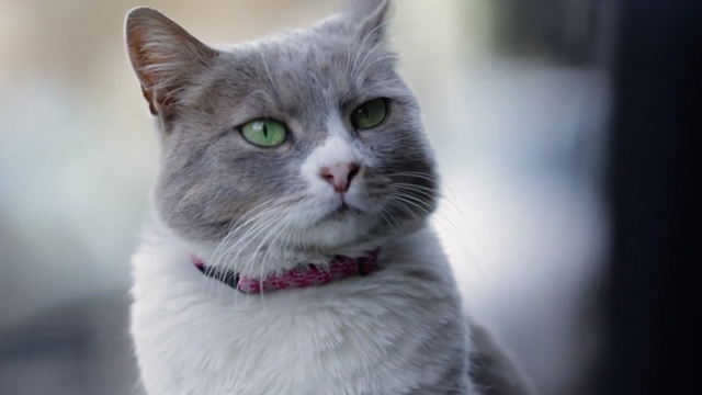 Kedi - close up of gray and white cat Duman