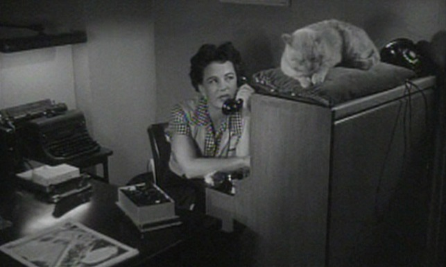 Kiss Me Deadly - orange tom cat on answering service switchboard