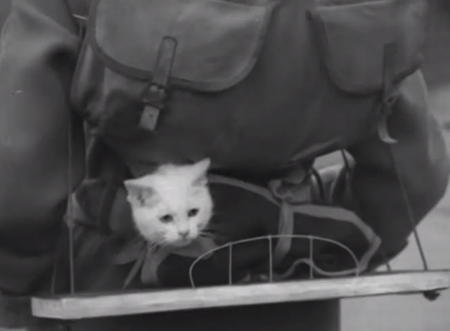 Kitten Carrier Bag - white kitten in harness on backpack