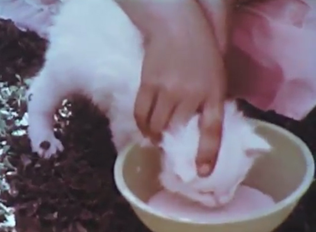Kittens: Birth and Growth - white kitten with face being pushed down towards a bowl of milk