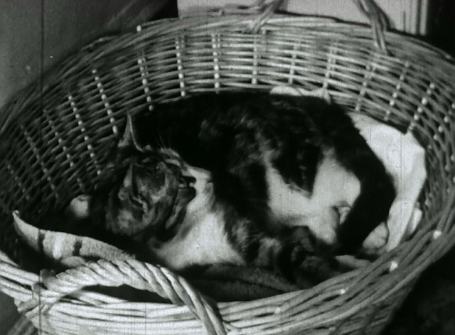 Kitty Cleans Up - Kitty tabby cat in basket