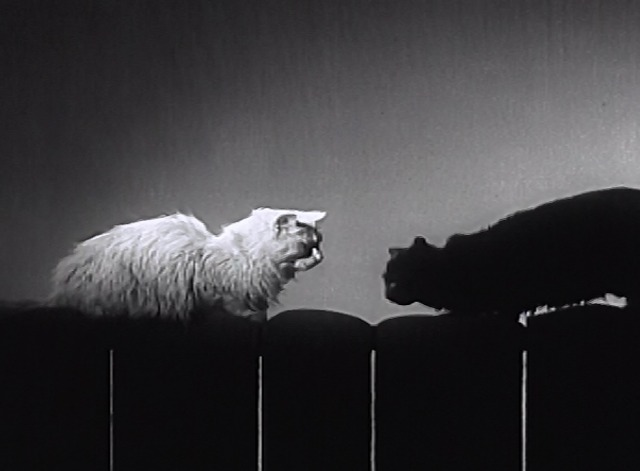Knights on the Highway - white cat and black cat